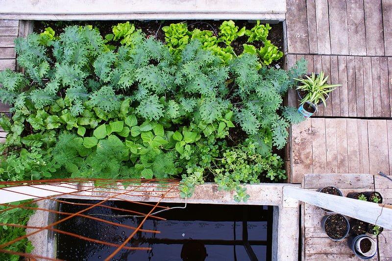 Photo:Prototipo de invernadero. Huerto familiar. By:Colectivo Ecologista Jalisco