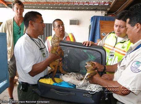 iguanas_galapagos