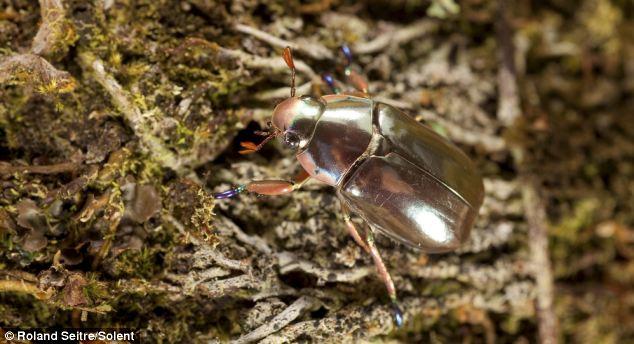 img_silver_beetle03.jpg